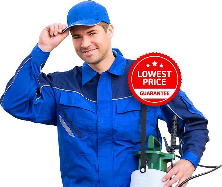 building and pest inspection Sydney