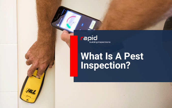 What Is A Pest Inspection?