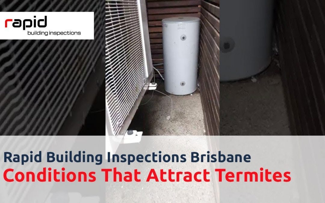Rapid Building Inspection Brisbane – Conditions That Attract Termites